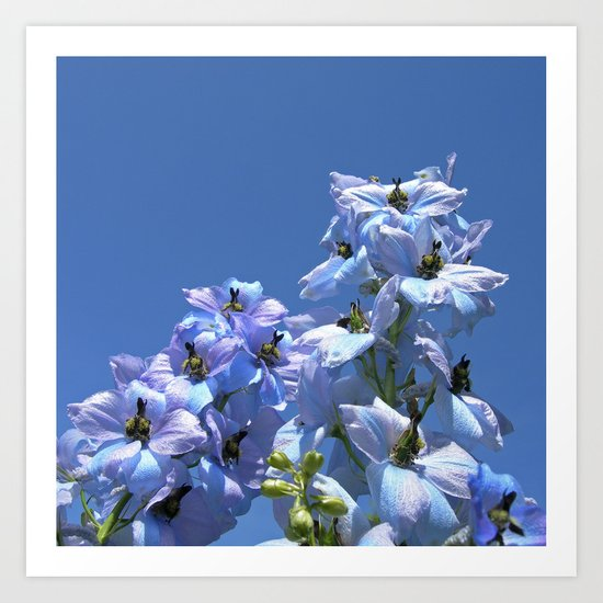 delphinium bloom II Art Print