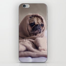 Snug pug in a rug iPhone Skin