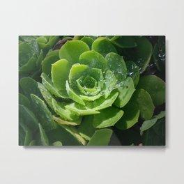 Dewy Green Metal Print
