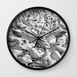 Fou de Bassan #3 Wall Clock