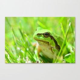 Green European Tree Frog Canvas Print