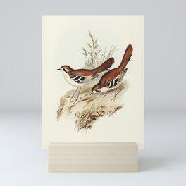 Eastern Scrub-Robin (Drymodes superciliaris) illustrated by Elizabeth Gould (1804-1841) for John Gou Mini Art Print