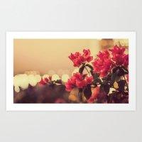 Red Flowers in Sunlight Art Print