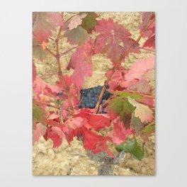Rioja Grapes Canvas Print