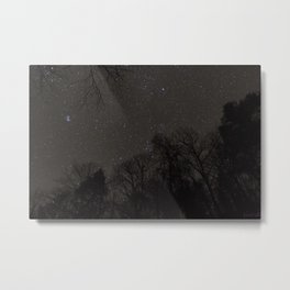 Stars from the Forest Floor Metal Print