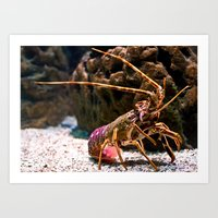 lobster Art Prints featuring Lobster by Moonlake Designs