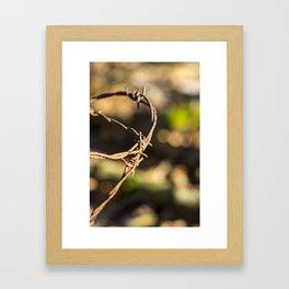 Barb wire Framed Art Print
