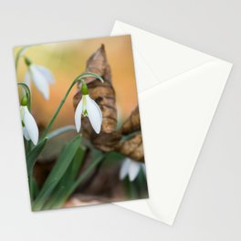 Opposites new and old in the garden Stationery Cards