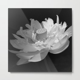Lotus-330 Metal Print