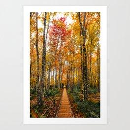 Acadia Autumn Art Print