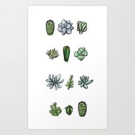 One Dozen Succulents Art Print