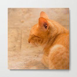 Orange Cat Is Resting On The Terrace  #decor #society6 #homedecor Metal Print