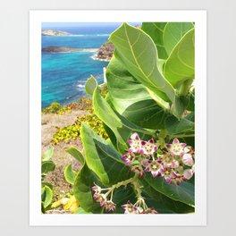St. Barts succulents Art Print