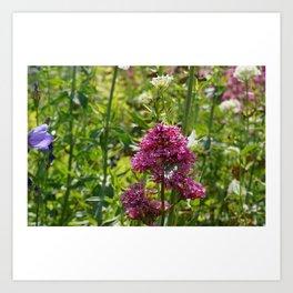 French Flowers Art Print