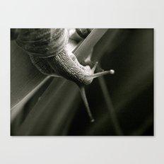 Snail Love  (London & Travel) Canvas Print