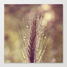 summer rain Canvas Print