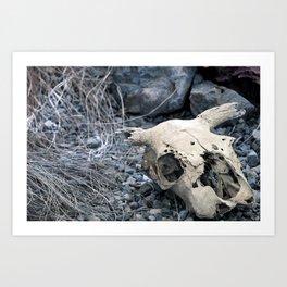 Desert Skull Two Art Print