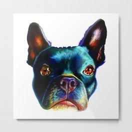 colorful boston terrier Metal Print