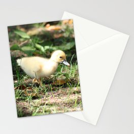 Baby Duckling strolling on a lawn Stationery Cards