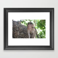 INDIA - Monkey with his Eyes Closed Framed Art Print