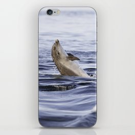 Playful young dolphin iPhone Skin
