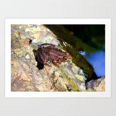 Froggie  Art Print