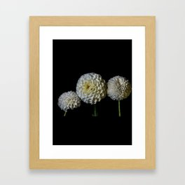 Flowers…subtle colors - 166 Framed Art Print