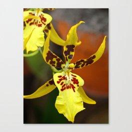 Yellow Miltonia I Canvas Print