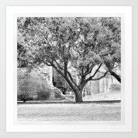 Live Oak Art Print