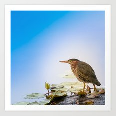 Crowned Night-Heron- Hammond pond Art Print
