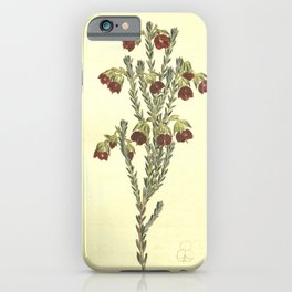 Flower 1214 erica thunbergii Globular tubed Heath10 iPhone Case