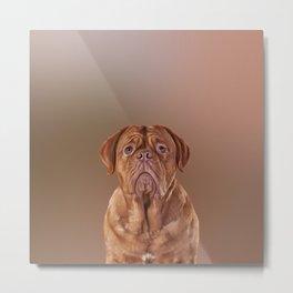 Drawing dog portrait Dogue de Bordeaux Metal Print