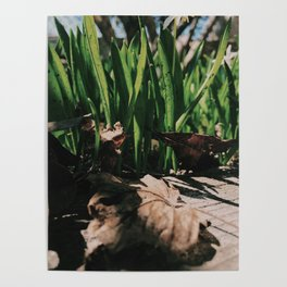 Hiding in the grass Poster