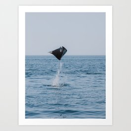 Flying Ray in the Sea of Cortez, Baja California Sur | Mexico Photography Art Print