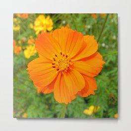 orange bloom Metal Print