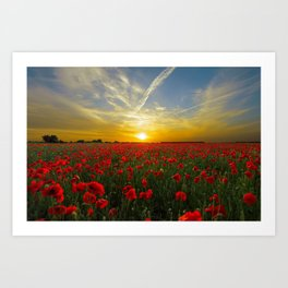 Beautiful Sunset Art Print