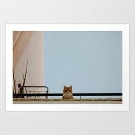 A Cretan Cat. Art Print