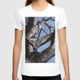maple tree in winter T-shirt