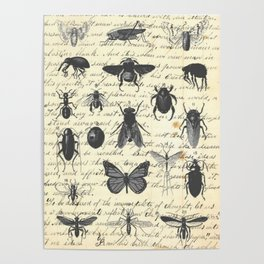 Insect Study on antique journal paper Poster