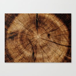 Tree Rings Canvas Print
