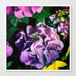 Hydrangeas at Botanical Garden Canvas Print