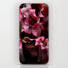 Carnivorous plant #1 iPhone Skin