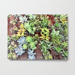 Succulent Party Metal Print