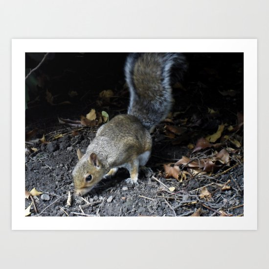 Squirrel Forage Art Print