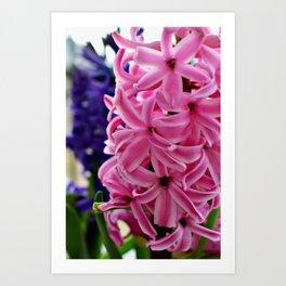 Pink hyacinth II Art Print