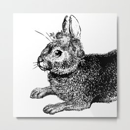 The Rabbit and Roses | Black and White Metal Print