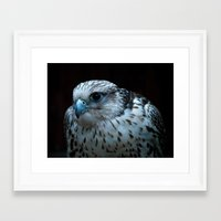falcon Framed Art Prints featuring falcon by Jo Beerens