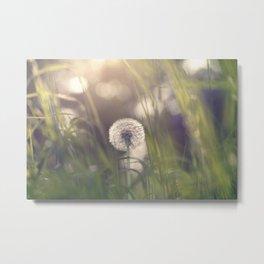 Dandelion blossom defocused in garden Metal Print