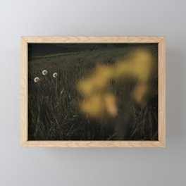 Buttercup Flower in a filed. Framed Mini Art Print