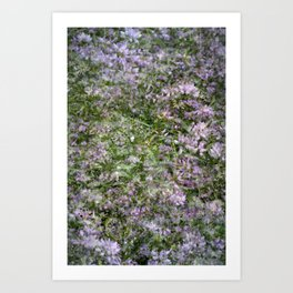 Clover Exposures Art Print
